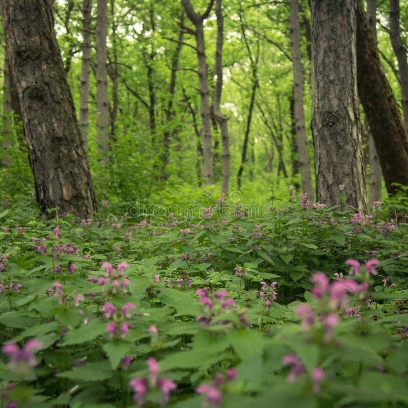 Giorno nella foresta immagini stock