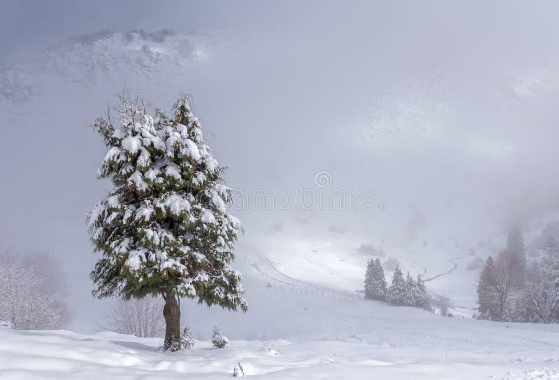 giorno nevoso fotografia stock