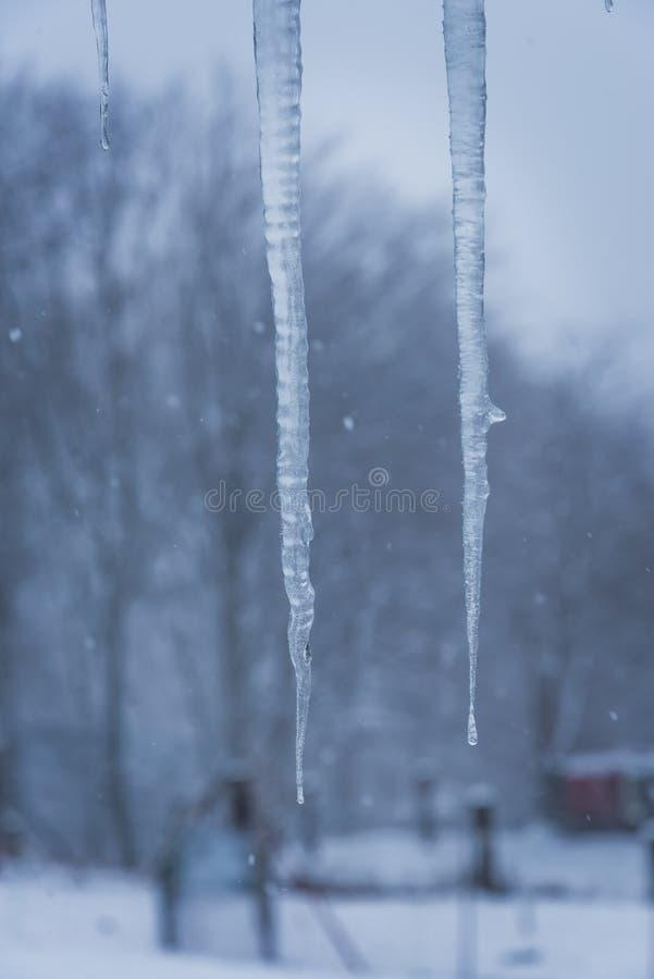 Giorno nevoso dello stalttite del ghiaccio due fotografia stock libera da diritti