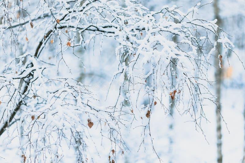 Giorno nevoso di inverno in un bello al bordo della foresta fotografia stock