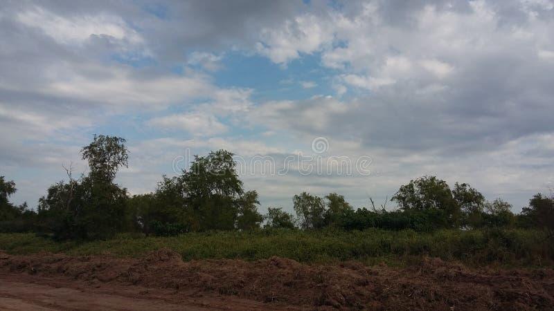 Giorno nuvoloso della natura della foresta degli alberi immagine stock libera da diritti