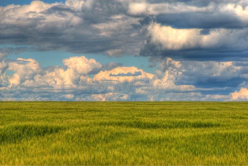 Giorno nuvoloso sopra il campo immagini stock