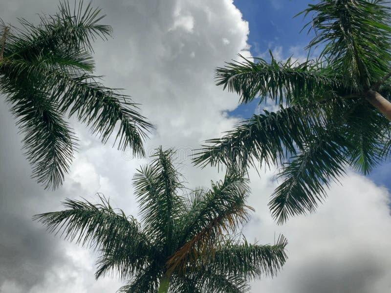 Giorno nuvoloso tropicale fotografia stock