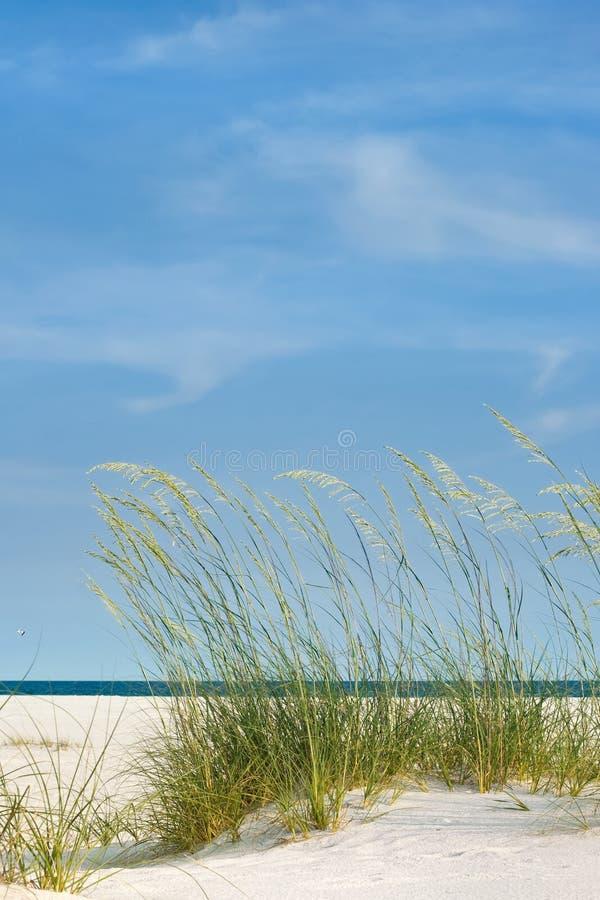 Giorno perfetto alla spiaggia immagine stock libera da diritti