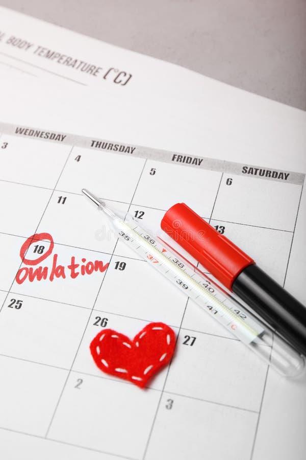 Giorno promettente e fertile per il bambino di concepimento Pianificazione familiare Ciclo di ovulazione immagini stock libere da diritti