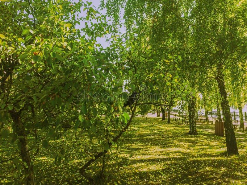 Giorno soleggiato di autunno nel parco dal lato del fiume fotografia stock libera da diritti