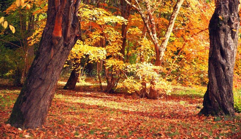 Giorno soleggiato di autunno nelle parti anteriori fotografia stock