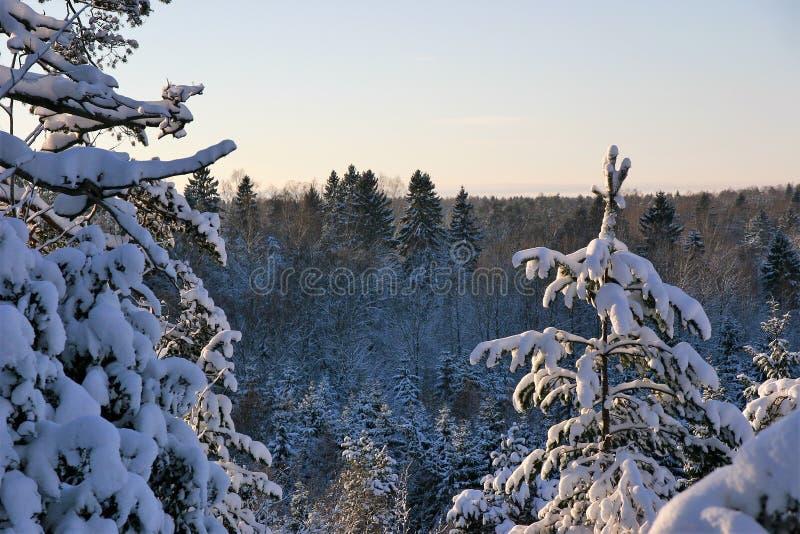 Giorno soleggiato e freddo di Snowy, nel legno fotografia stock