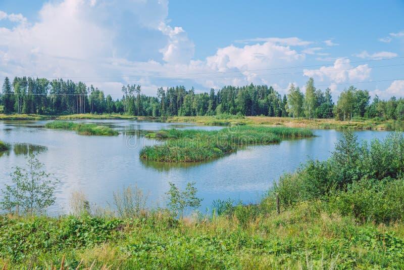 Giorno soleggiato, lago e prato con cielo blu Treeas e nuvole fotografia stock libera da diritti