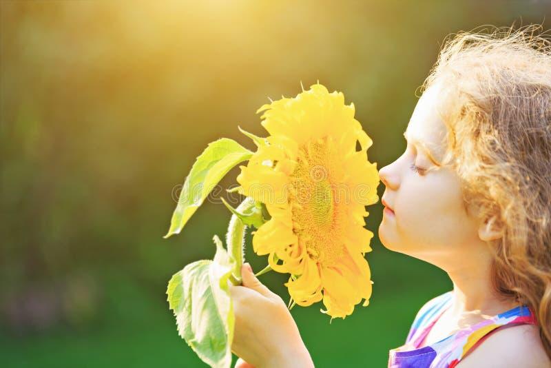 Giorno soleggiato odorante del girasole del bambino divertente all'aperto fotografie stock libere da diritti