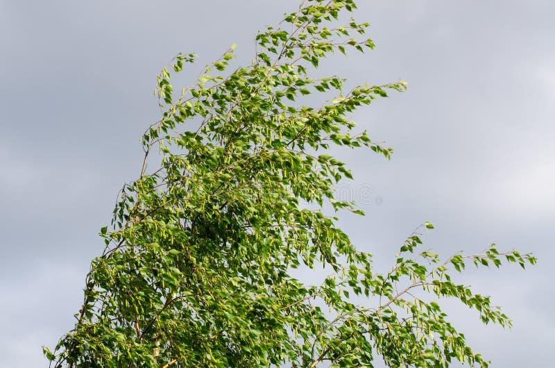Giorno ventoso immagine stock