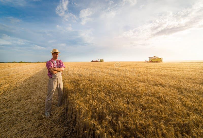 Giovane agricoltore nei giacimenti di grano durante il raccolto di estate fotografia stock libera da diritti