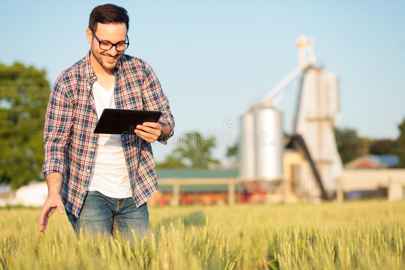 Giovane agricoltore o agronomo felice che ispeziona le piante del grano in un campo, lavorante ad una compressa fotografie stock libere da diritti