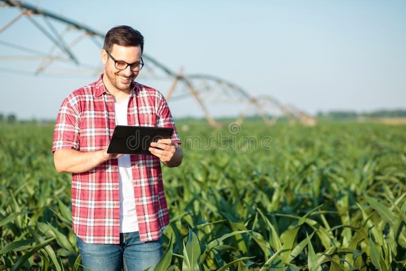 Giovane agricoltore o agronomo felice che utilizza una compressa nel campo di grano Impianto di irrigazione nei precedenti fotografie stock libere da diritti