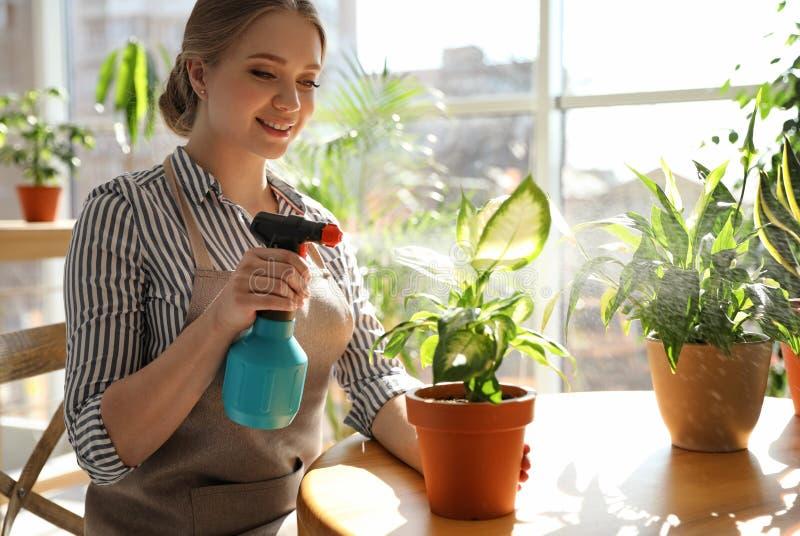 Giovane bella donna che prende cura delle piante domestiche alla tavola all'interno fotografia stock libera da diritti