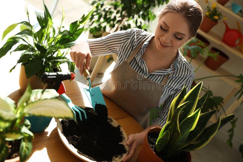 Giovane bella donna che prende cura delle piante domestiche alla tavola di legno fotografia stock libera da diritti