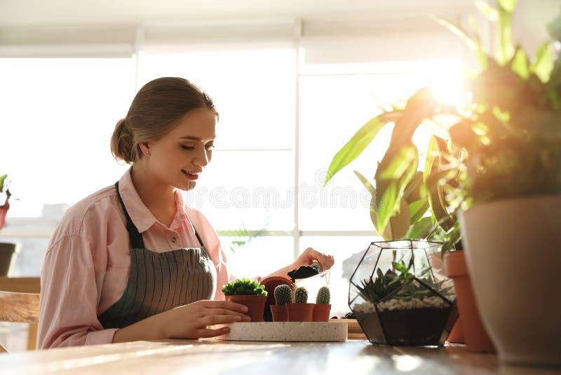 Giovane bella donna che prende cura delle piante domestiche alla tavola di legno immagine stock