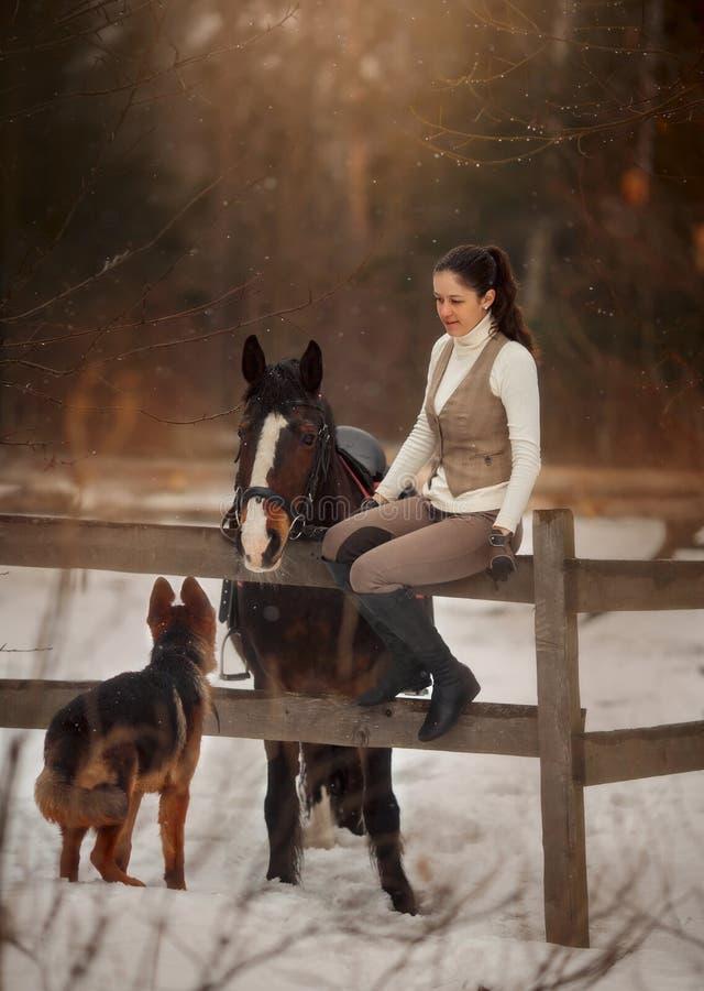 Giovane bella donna con il ritratto all'aperto del cane da pastore tedesco e del cavallo fotografia stock