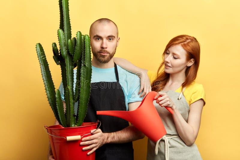 Giovane bella donna e cura di presa nhandsome delle piante domestiche fotografia stock libera da diritti