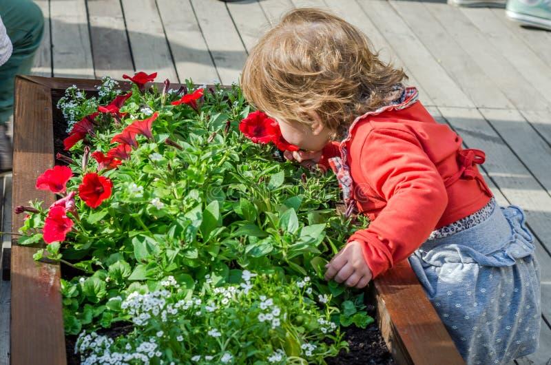 Giovane bello bambino della ragazza, bambino che gioca nella via della città antica vicino alle aiole con i fiori rossi, allegro  fotografia stock