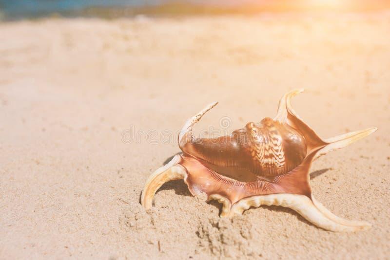 Giovane bello che si trova in un'amaca ad una spiaggia soleggiata da un oceano fotografia stock