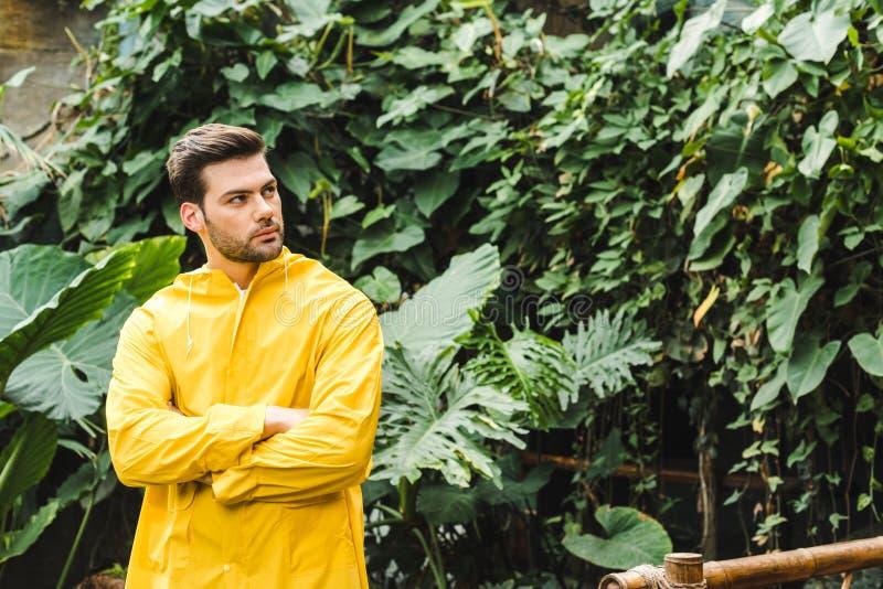 giovane bello in impermeabile giallo nello sguardo della giungla immagine stock