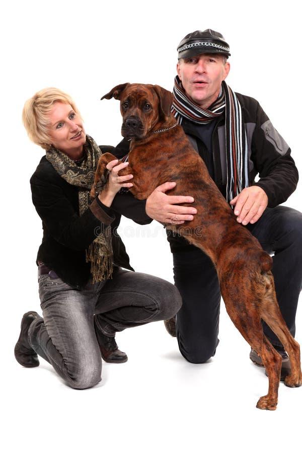 Giovane cane pugile/di razza mista con una coppia immagine stock