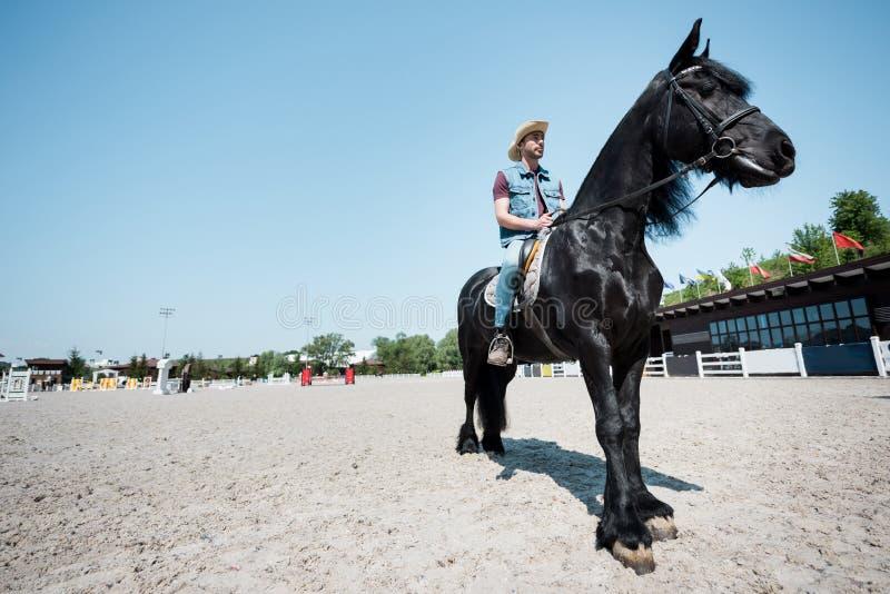 Giovane in cappello da cowboy che monta cavallo marrone di razza fotografia stock