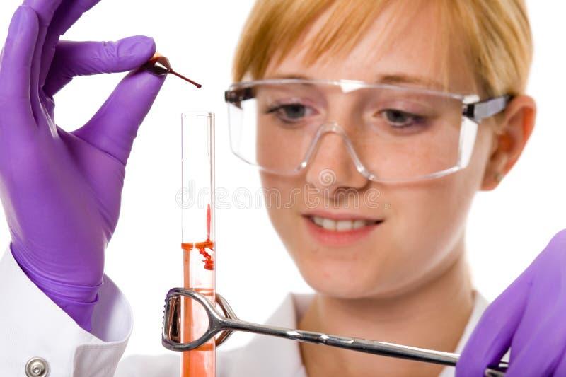 Giovane chimico femminile che effettua una certa ricerca, isolata fotografie stock libere da diritti