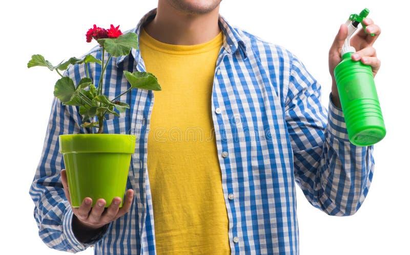 Giovane con il vaso di fiore isolato su bianco immagini stock