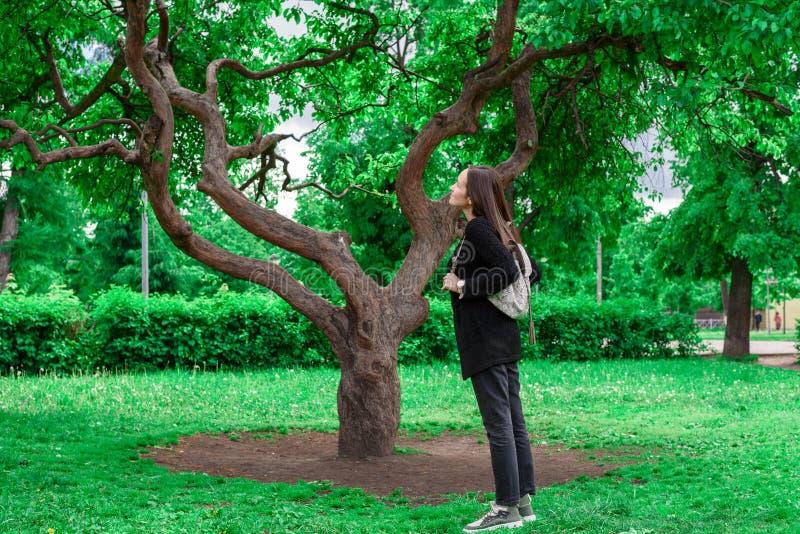 Giovane condizione castana sotto un grande albero verde e cercare le foglie, amore per la natura, ecologia, conservazione della v immagini stock