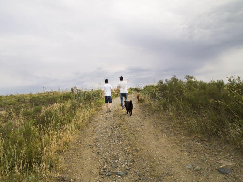 Giovane coppia omosessuale che cammina per mano con due cani fotografie stock libere da diritti