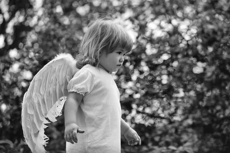 Giovane cupido Bambino piccolo in ali di angelo immagini stock libere da diritti