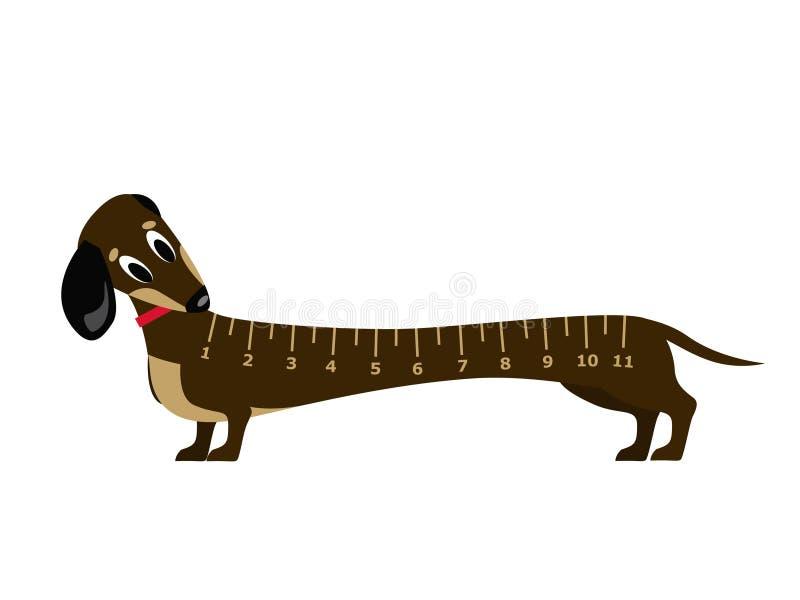 Giovane dachshound stupito illustrazione vettoriale