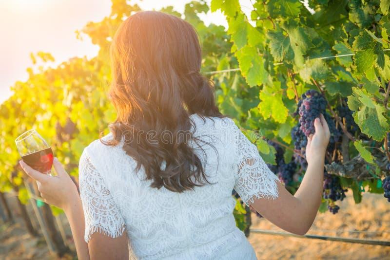Giovane donna adulta che gode dell'assaggio del bicchiere di vino che cammina nella vigna immagini stock libere da diritti