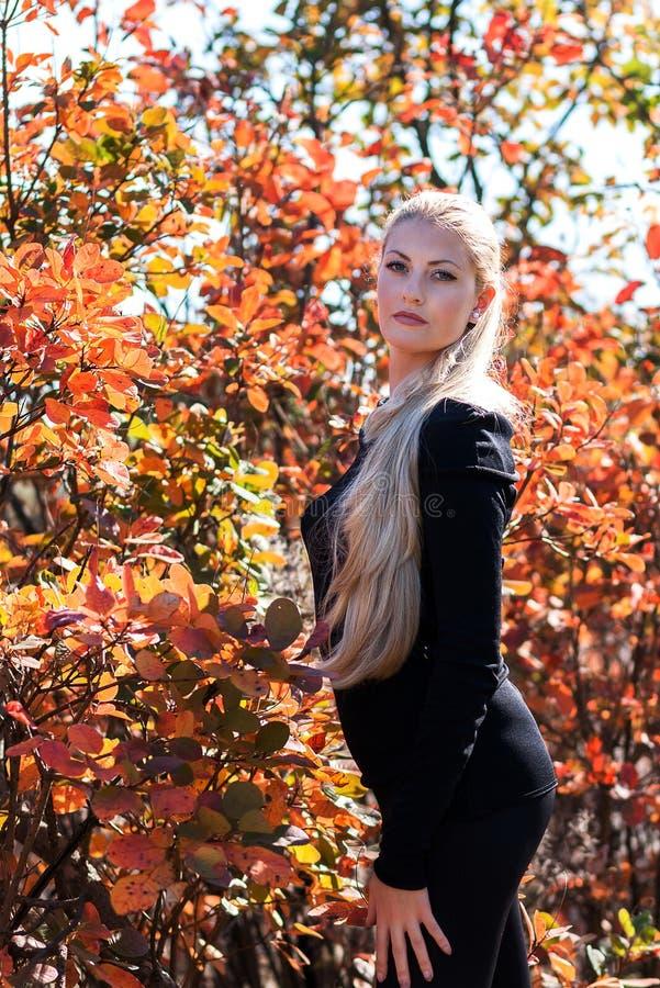 Giovane donna attraente con bei capelli biondi lunghi che posano ou fotografia stock libera da diritti