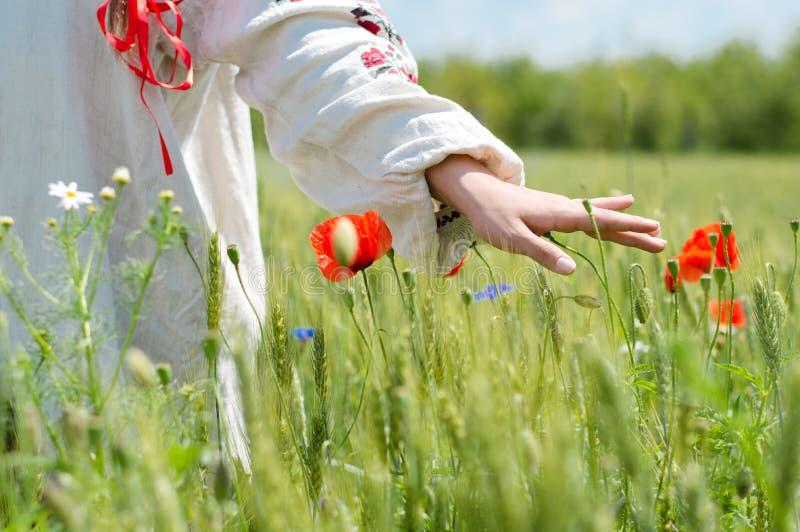 Giovane donna che cammina nel giacimento di grano verde sul primo piano della mano di giorno di estate fotografie stock