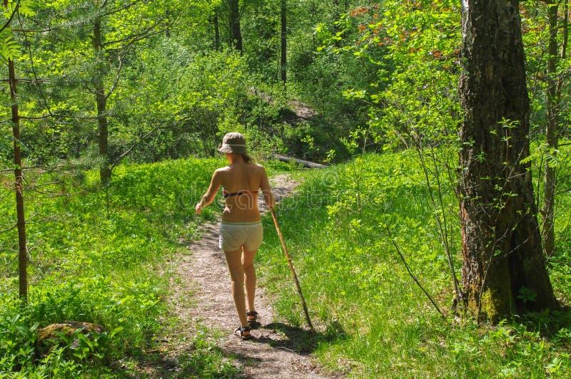 Giovane donna che fa un'escursione tramite il sentiero nel bosco verde con un bastone da passeggio immagini stock