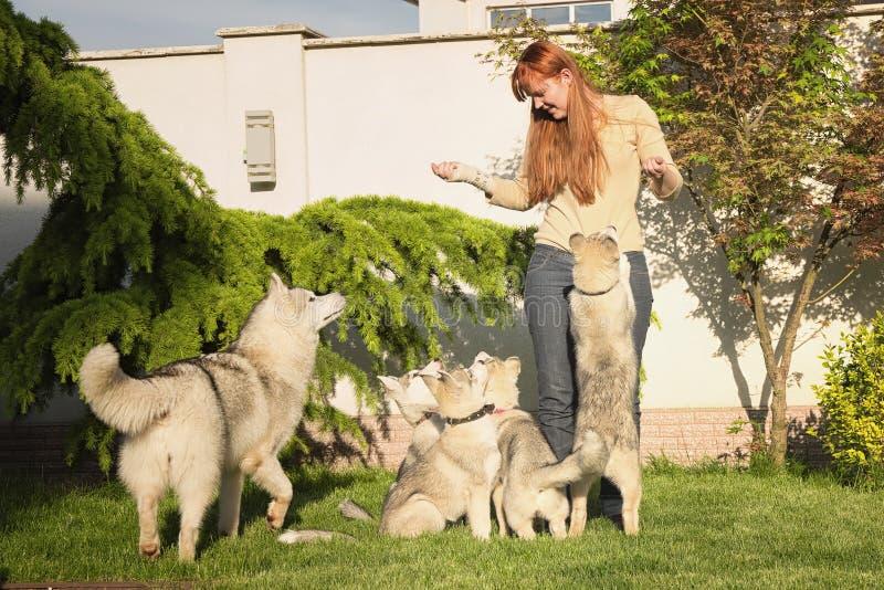 Giovane donna che gioca con i cani fotografia stock