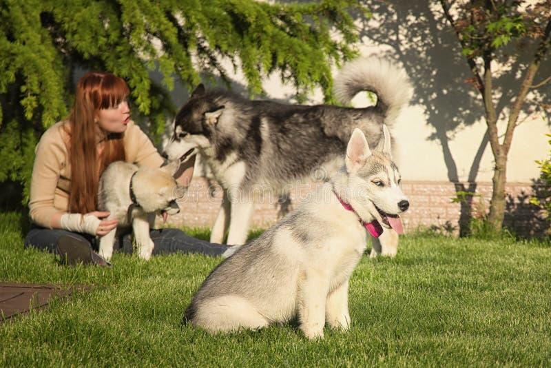 Giovane donna che gioca con i cani fotografie stock