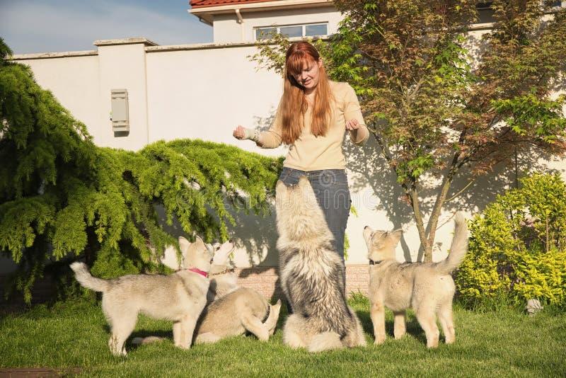 Giovane donna che gioca con i cani immagine stock libera da diritti