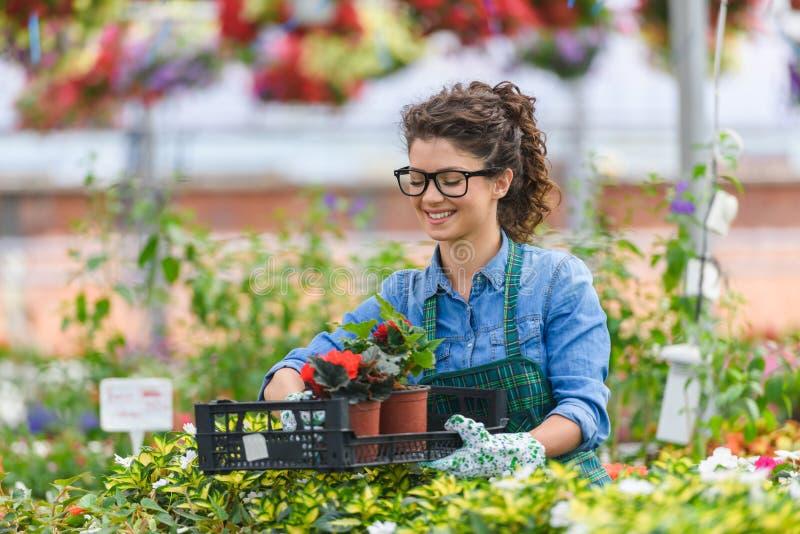 Giovane donna che lavora nel bello Garden Center fotografia stock libera da diritti