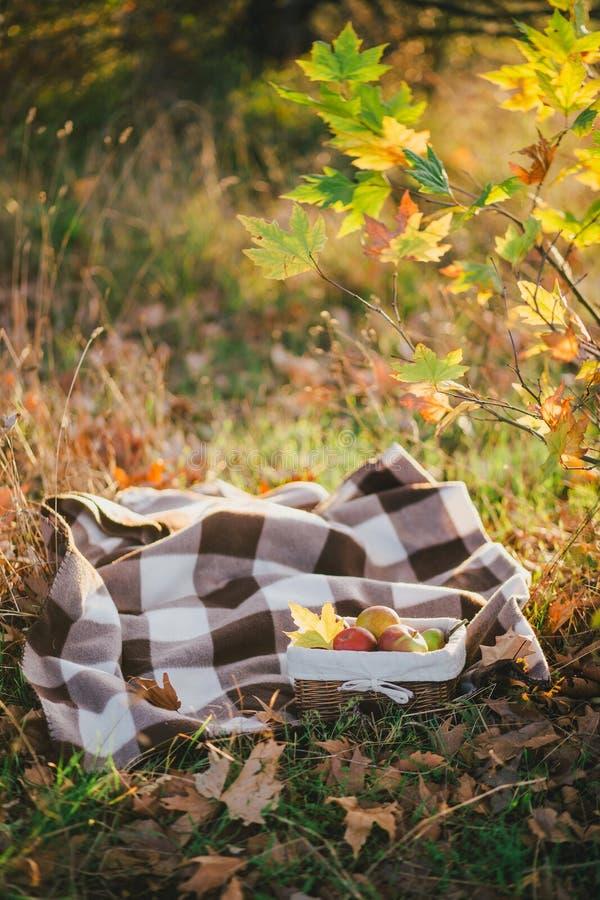 Giovane donna che porta poncio tricottato che ha picnic in una foresta: tè bevente e selezionare le mele immagini stock libere da diritti