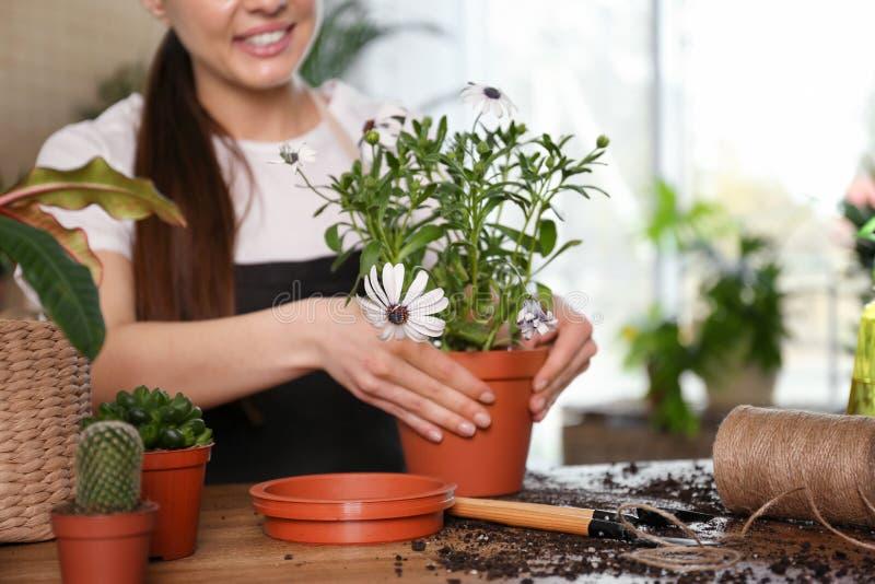 Giovane donna che prende cura delle piante in vaso a casa fotografie stock libere da diritti