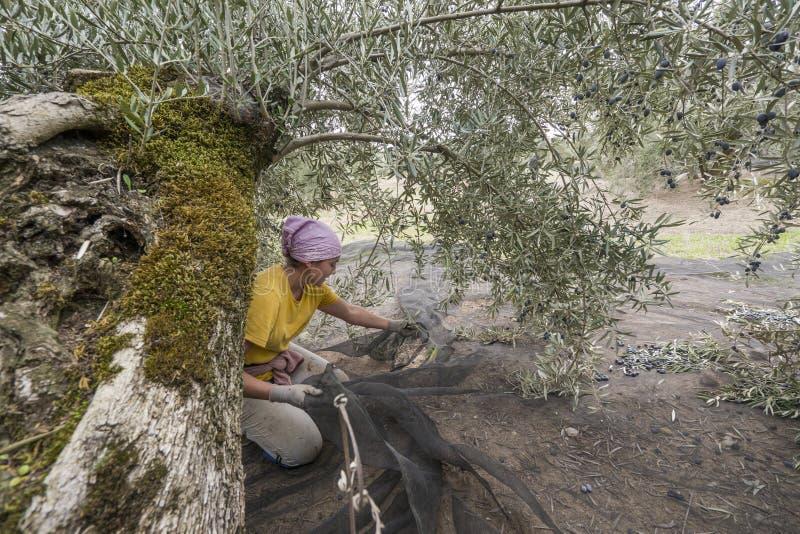 Giovane donna che prepara le reti tradizionali molli per il raccolto immagine stock libera da diritti