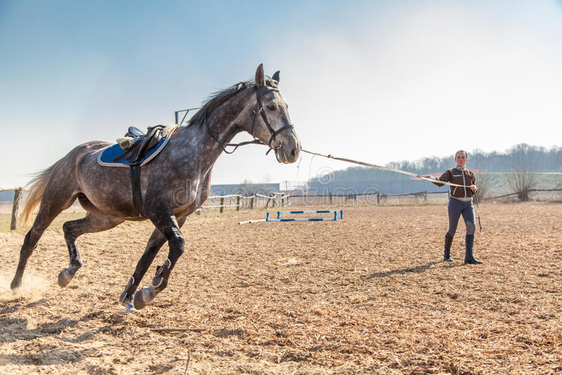 Giovane donna che prepara un cavallo fotografie stock libere da diritti