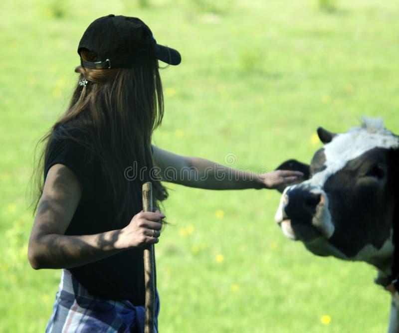 Giovane donna che segna una mucca fotografie stock libere da diritti