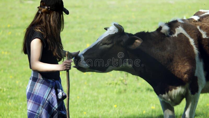 Giovane donna che segna una mucca Mucca ontented ¡ di Ð immagine stock libera da diritti