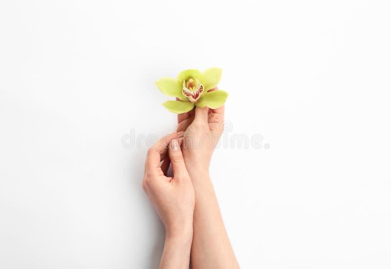 Giovane donna che tiene il bello fiore dell'orchidea su bianco fotografia stock libera da diritti