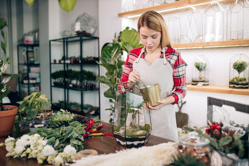 Giovane donna fiorista si prende cura delle piante fotografia stock